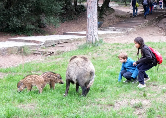 Discovering wild boars
