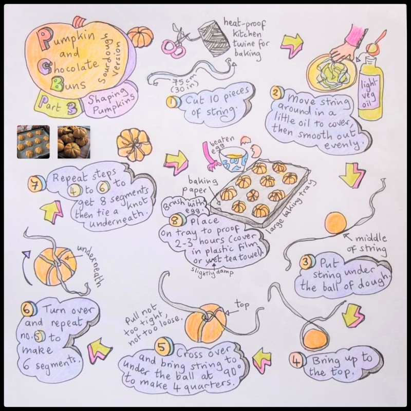 Pumpkin and chocolate buns, shaping illustrated recipe