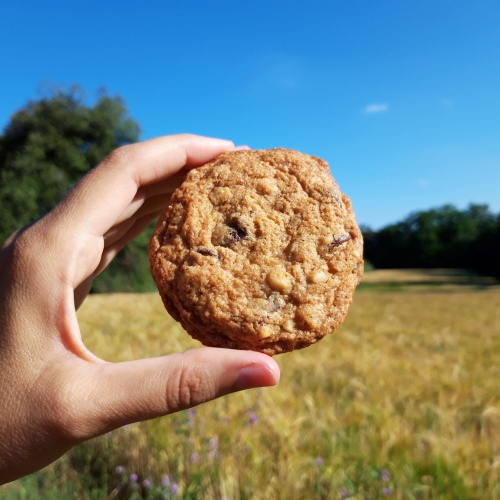 Chocolate chip cookie goes hiking